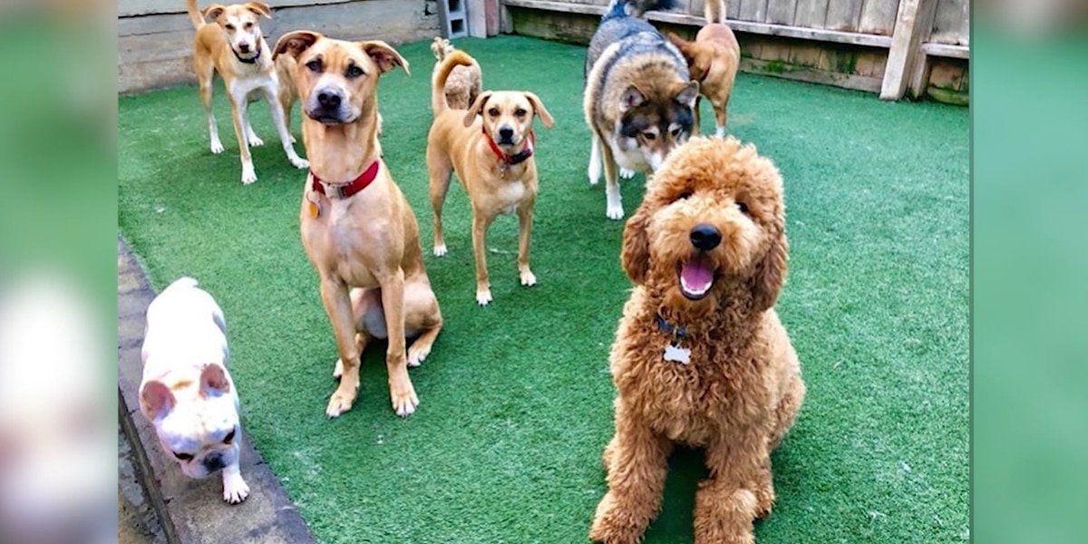 Calif. dog daycare remains open for first responders' pets