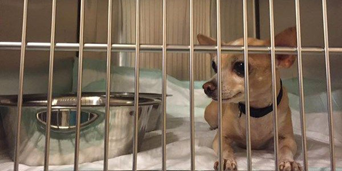 La. Dept. of Ag. sends team to assist with pet shelter at Lamar Dixon