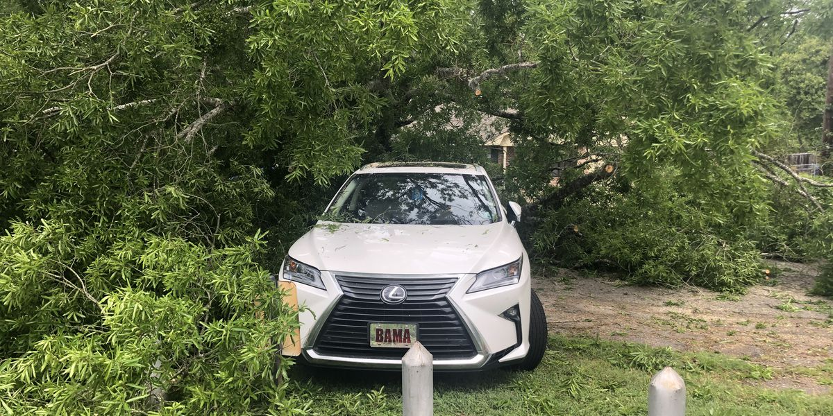 Tree falls on preacher's car during Palm Sunday church service