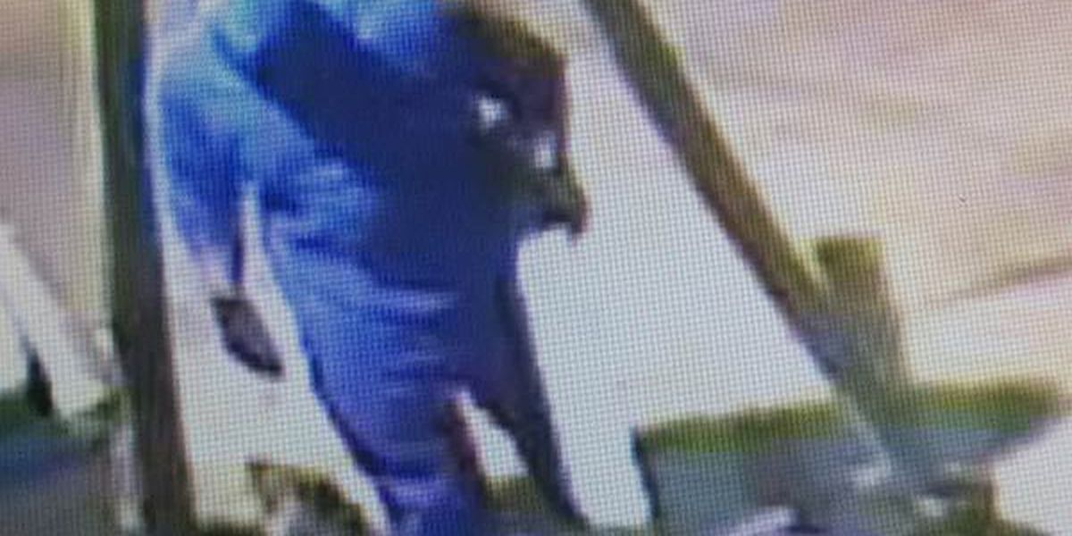 Deputies try to identify man caught on camera during lawnmower theft