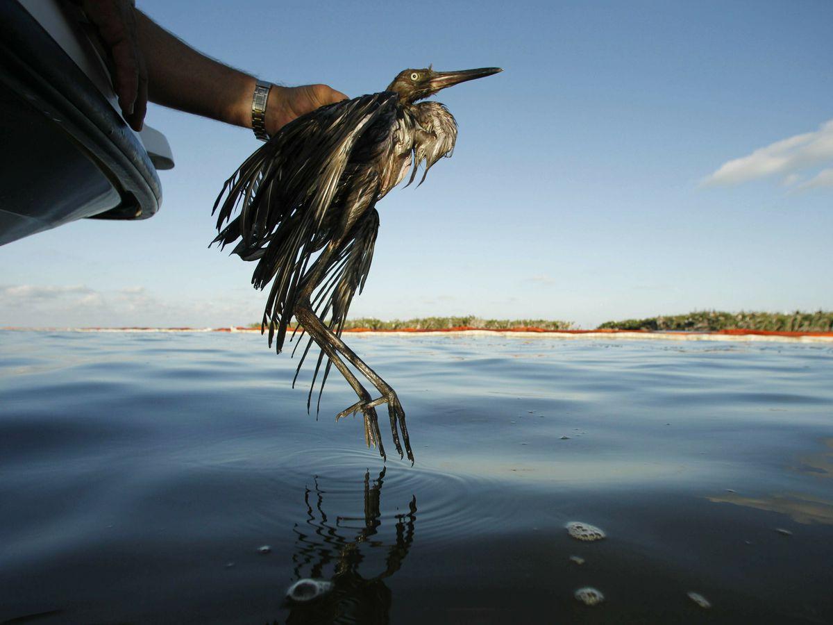 Biden delays Trump rule that weakened wild bird protections