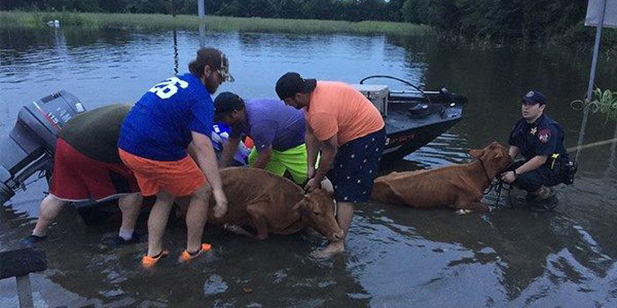 Volunteers, rescuers recall saving pets during great flood