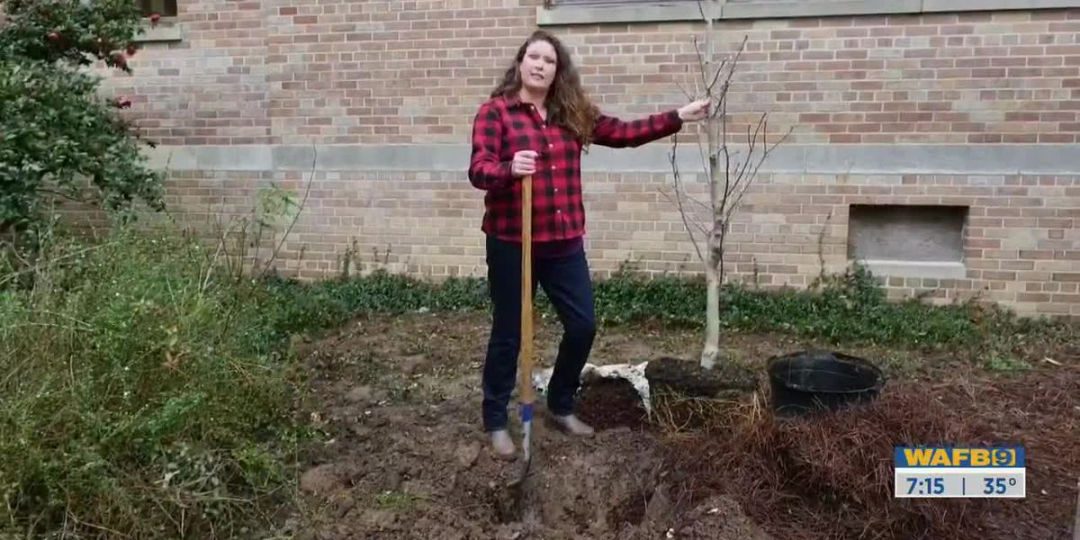 GET IT GROWING: Planting a tree