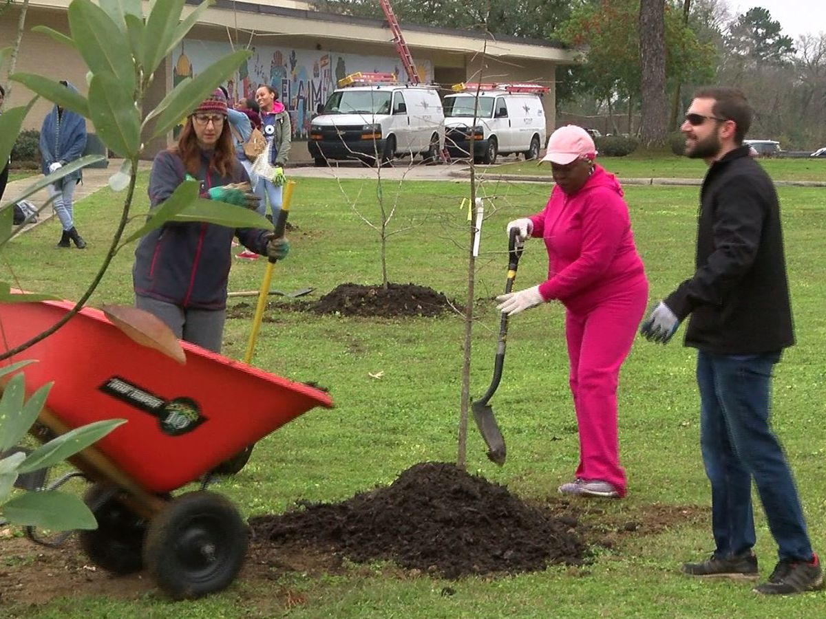 Baton Rouge Green plants trees on new school campus