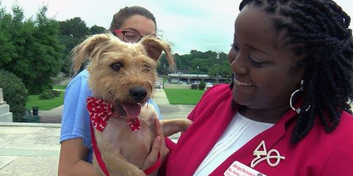 CAA holds Smooch a Pooch fundraiser to raise money to build new animal shelter