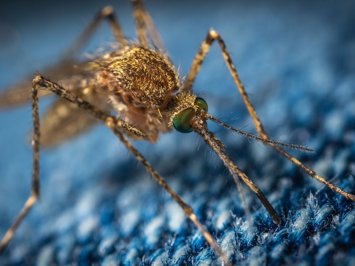 12 human cases of West Nile Virus in La. reported for 2019