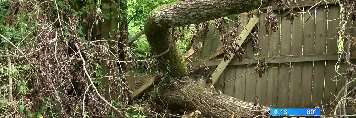 Man trying to get rid of tree from neighbor's property that destroyed his fence