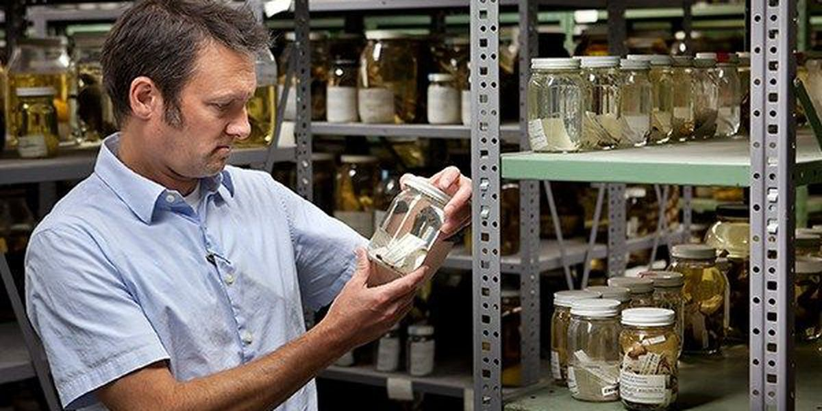 LSU professor extracts DNA from 100-year old specimens to be preserved for future scientific research
