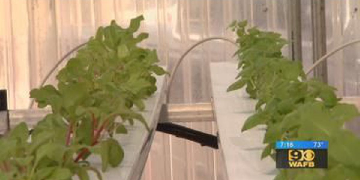 Get It Growing: Hydroponic system for growing greens