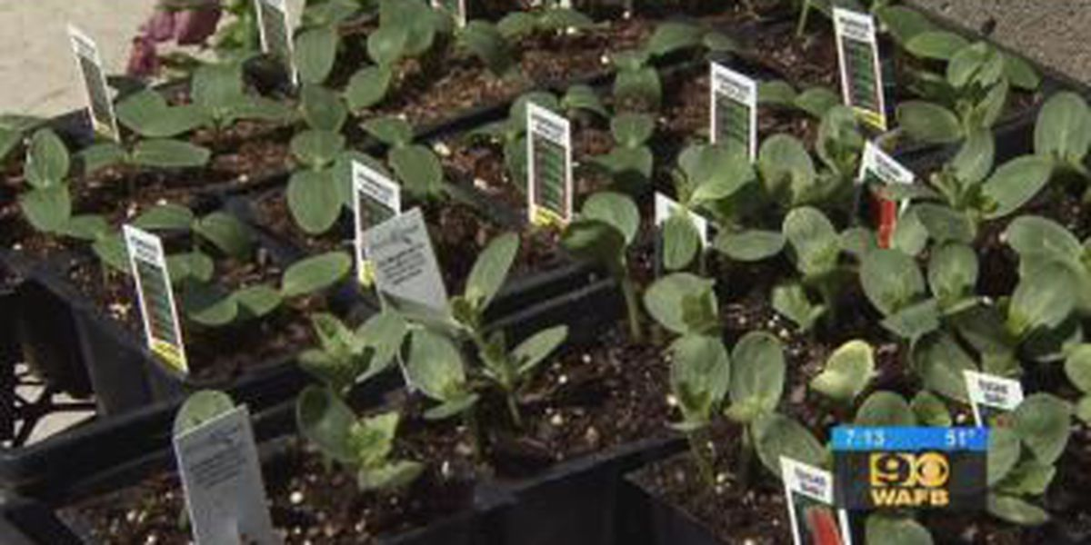 Get It Growing: Selecting vegetables from the cucumber family