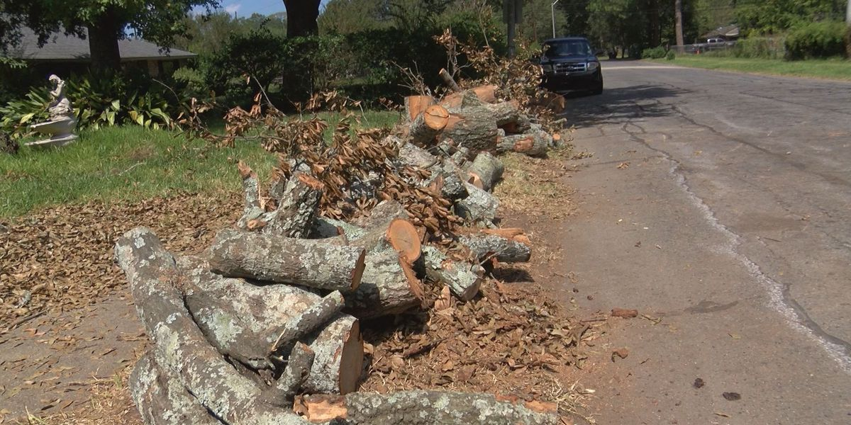 ACTION JACKSON: Debris from tree removal costing taxpayers