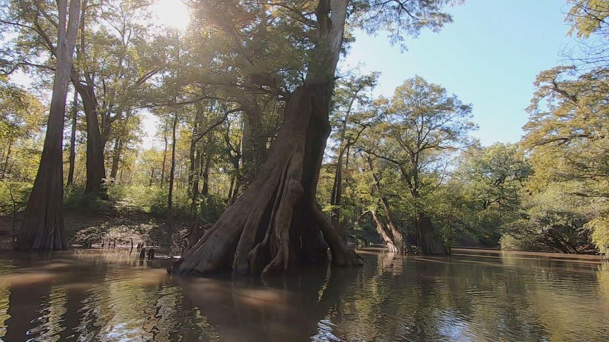 Heart of Louisiana: Castle Trees