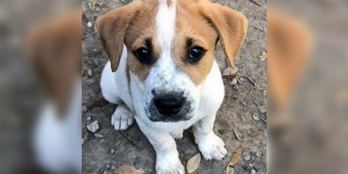 Pet adoption events scheduled at PetSmart on Millerville