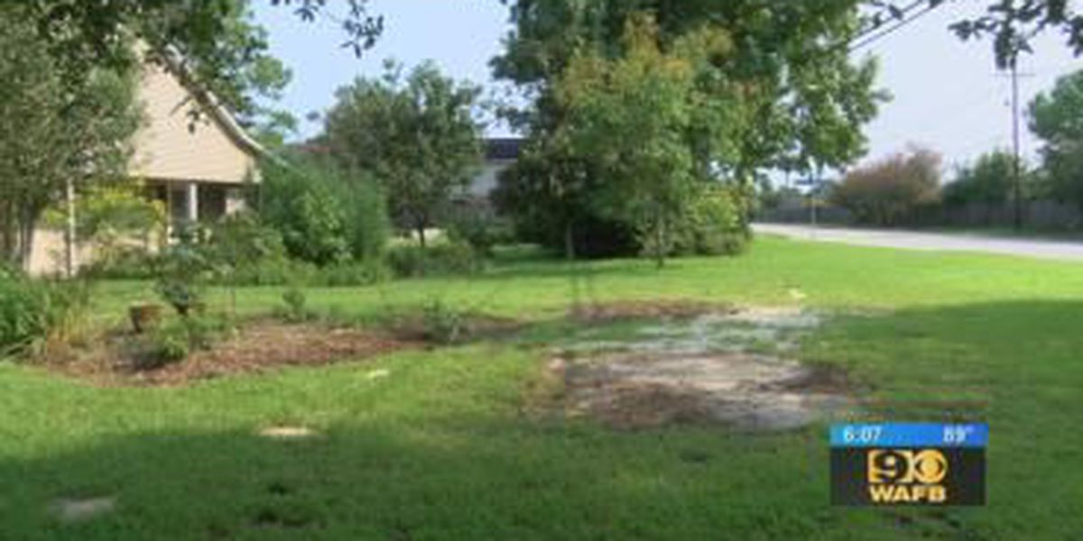 City removes cypress knees from woman's yard after 9News Alert Team story