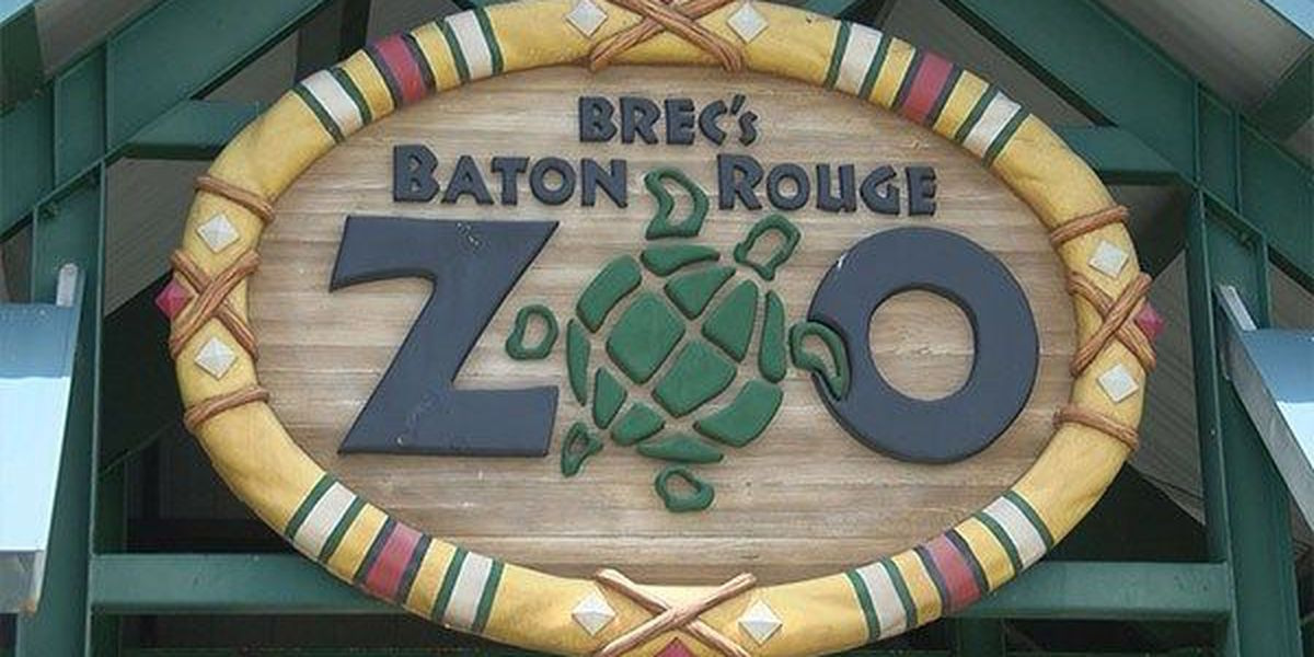 BREC Zoo to host ZooKrewe volunteer program training for teens