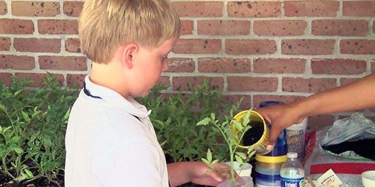 Homegrown Love program teaching kids gardening, healthy eating habits