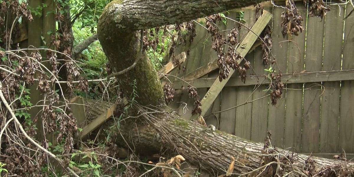 Man claims fence was destroyed by neighbor's tree, seeks help from Action Jackson