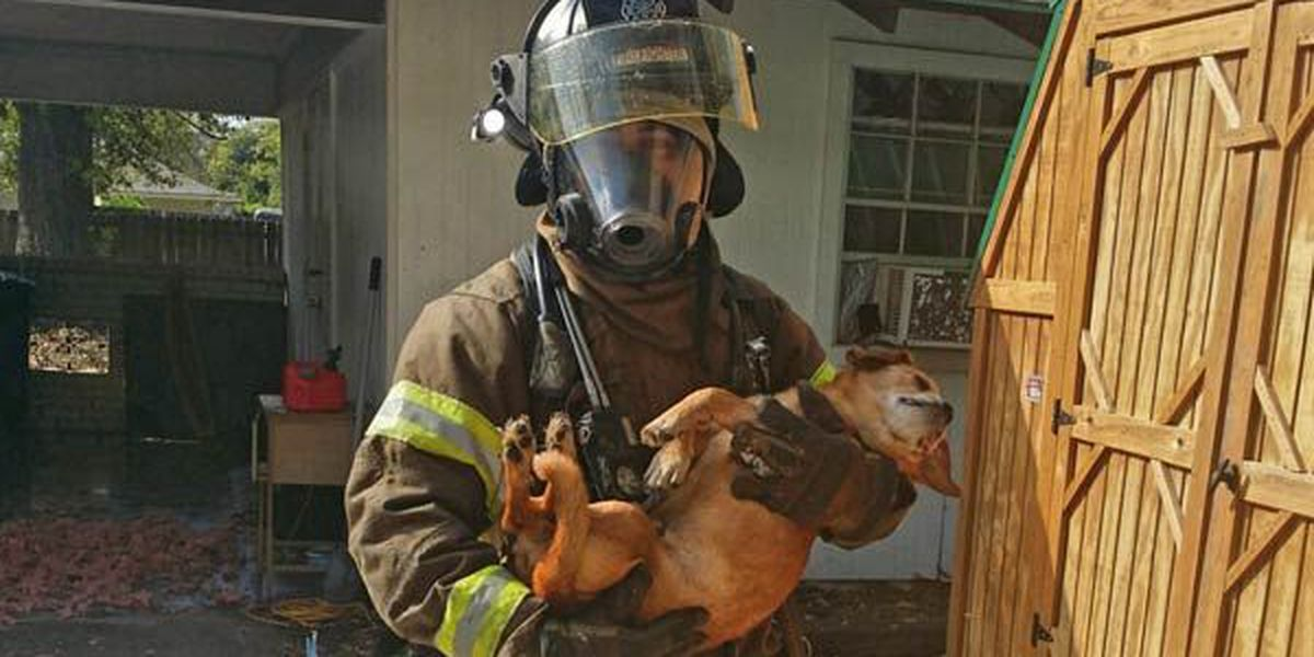 9 dogs, numerous cats rescued from house fire