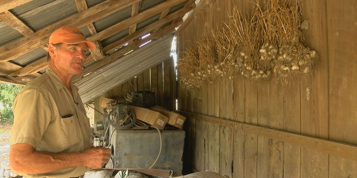 Local farmer to keep the ghouls away with creepy crop