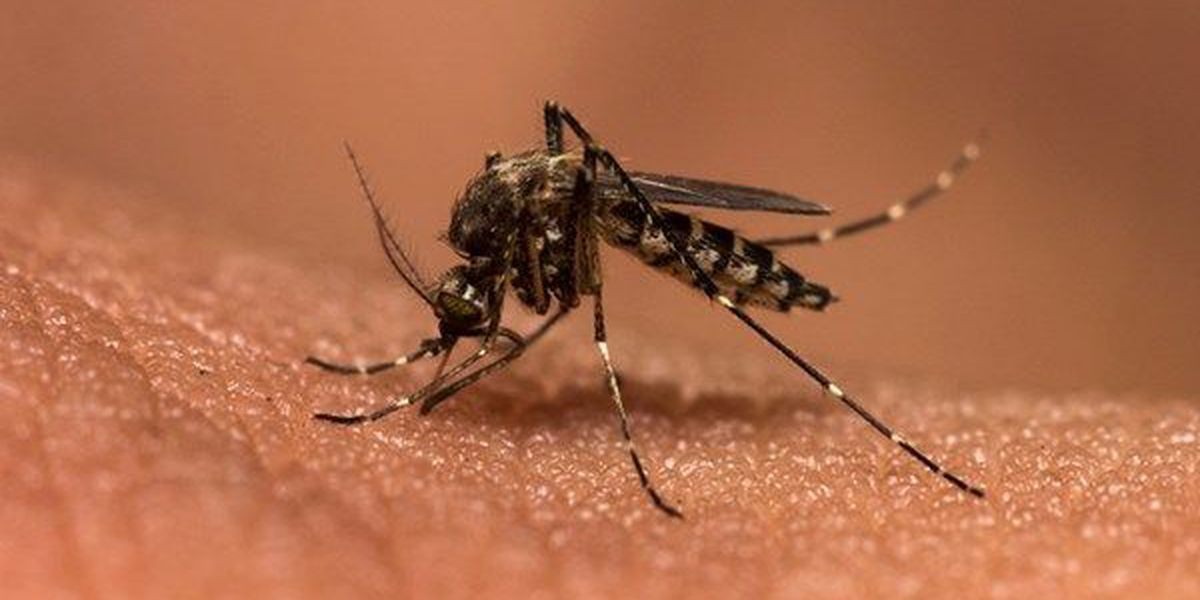 Ascension Parish to purchase drone to fight mosquitoes