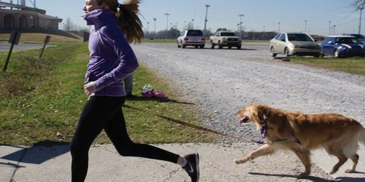 Great Rover Road Run features a 5K then run with your dog