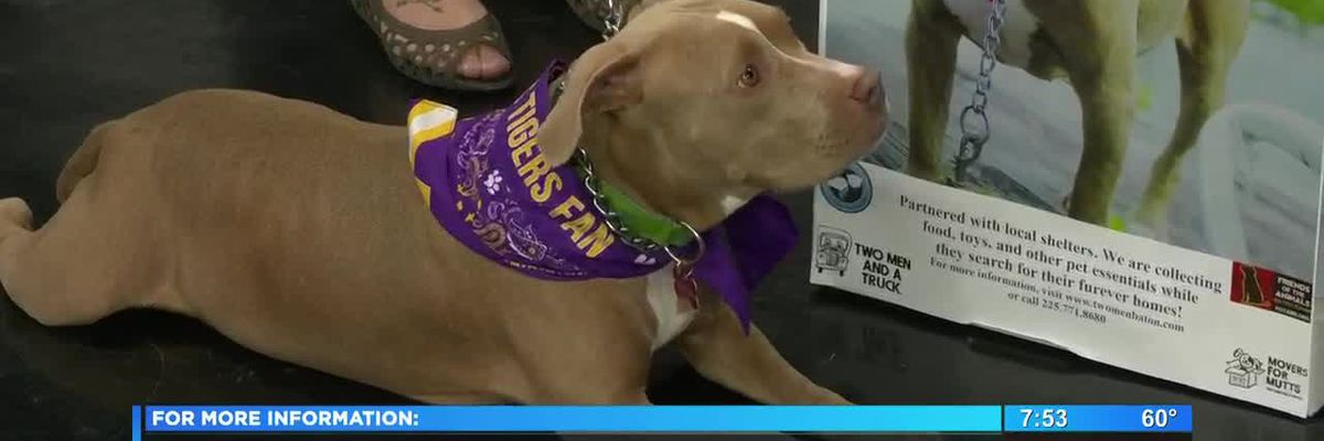 Movers for Mutts collecting supplies for animal shelters