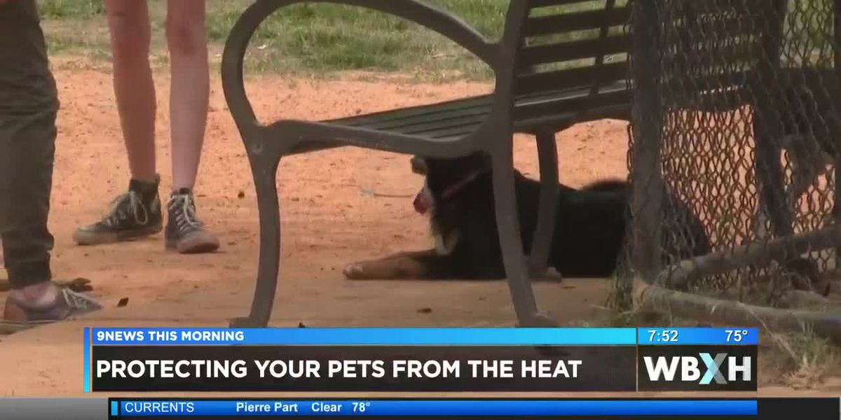 COMMUNITY - How protect your pet from the summer heat