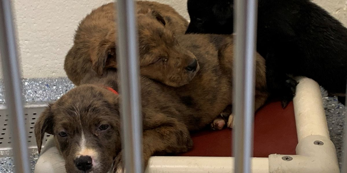 Companion Animal Alliance over capacity, asking people to adopt or foster