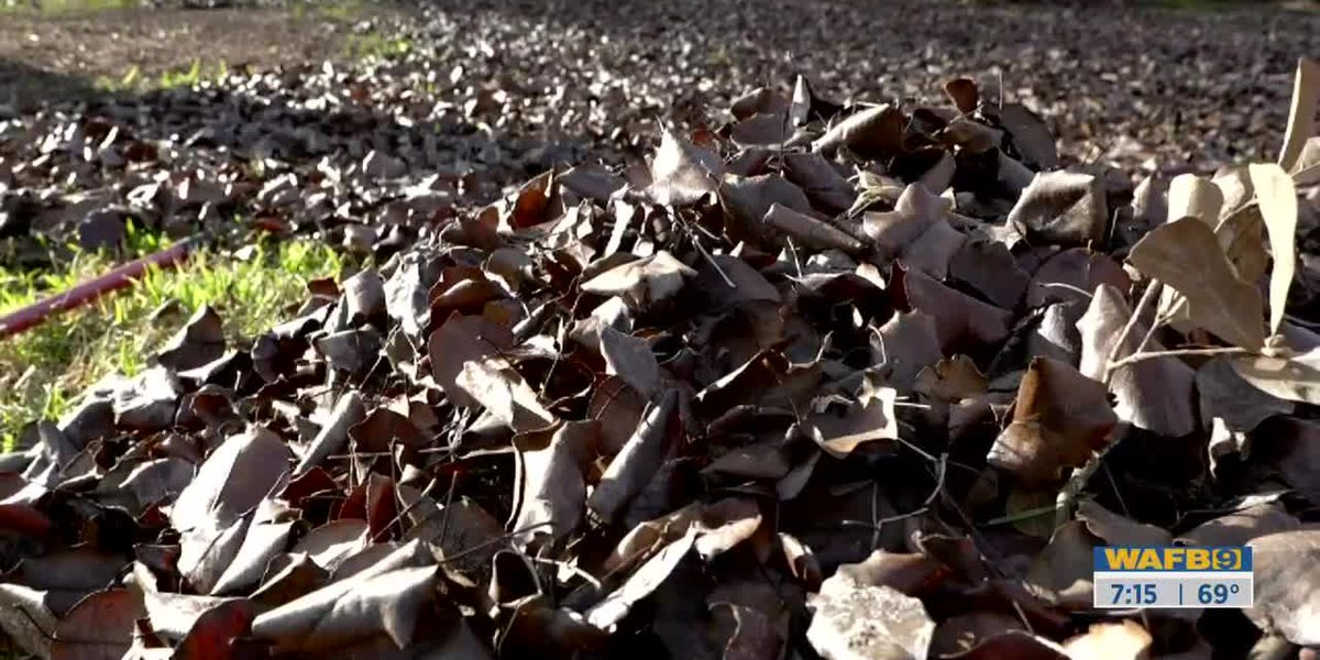 GET IT GROWING: What you can do with fallen leaves