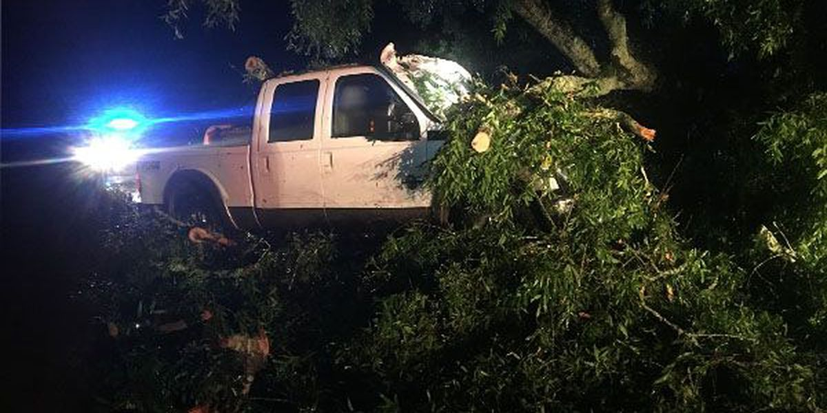 Driver rescued duringheightof storm after tree smashes vehicle