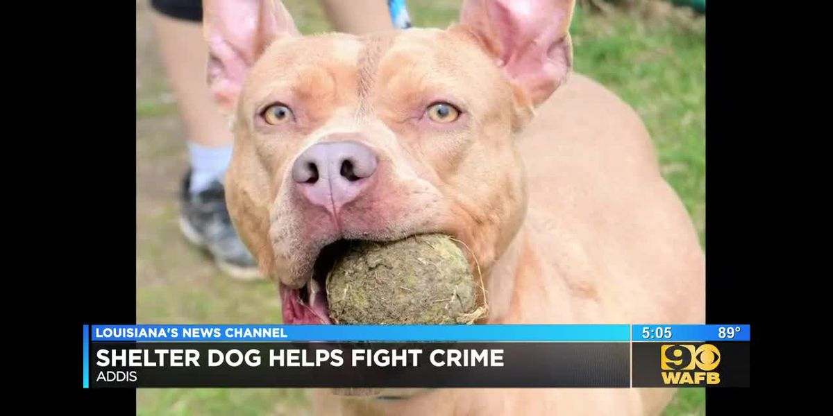 Shelter dog helps take $1 million worth of heroin off of the streets