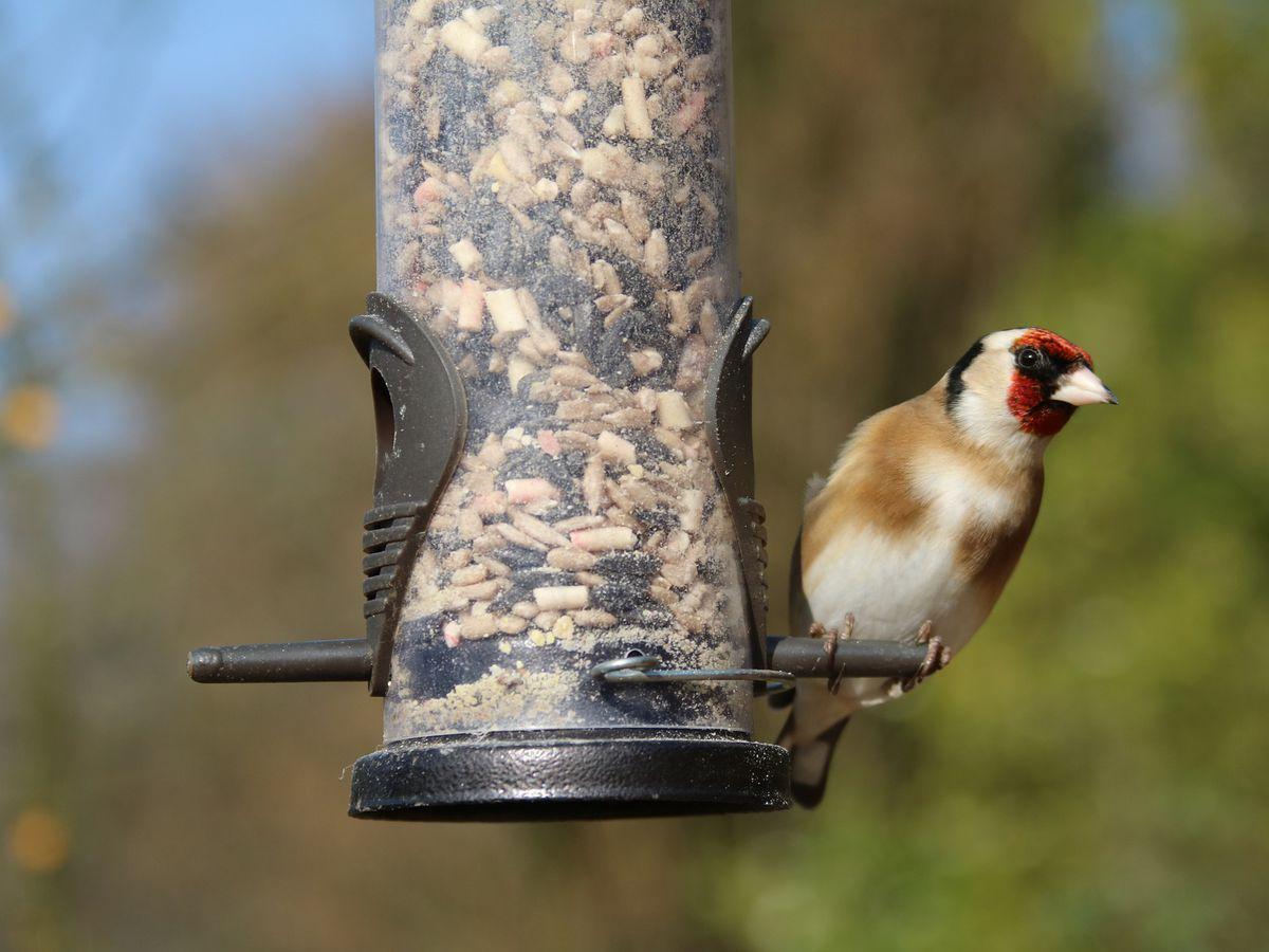 Birds killed in statewide Salmonella outbreak; bird feeders and birdbaths blamed