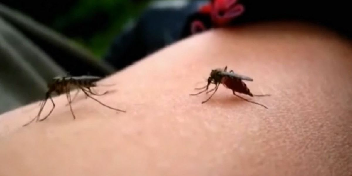 Sixth death in US from mosquito-borne disease EEE reported in Mass.