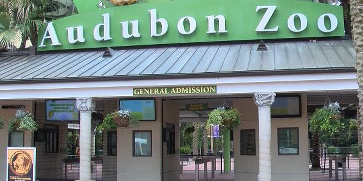 Audubon Nature Institute reports over 500 workers laid off