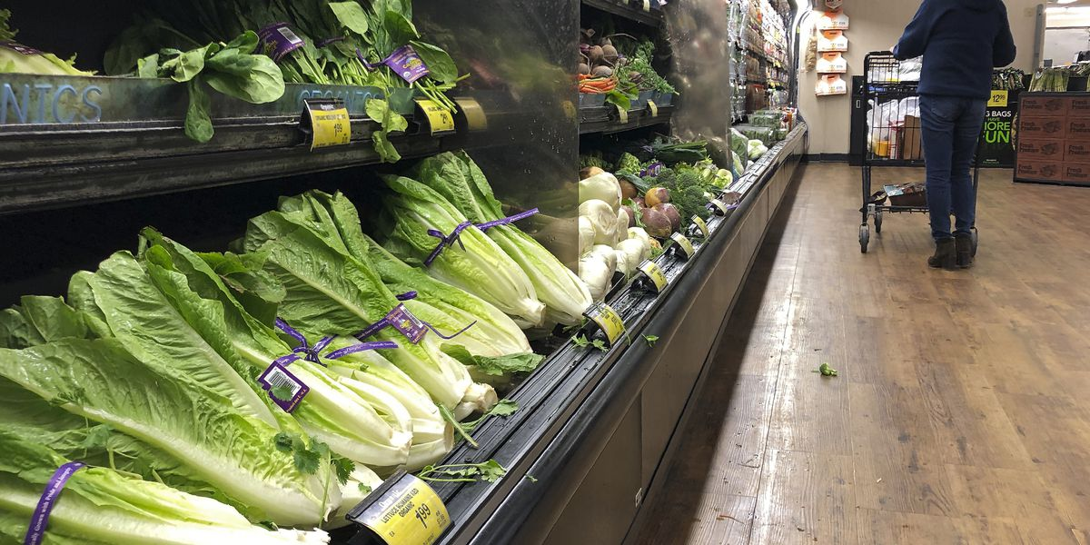 FDA says cows may have caused E. coli lettuce contamination