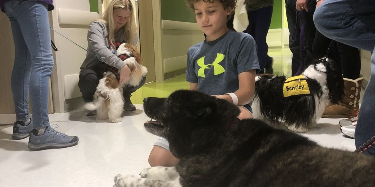 Service dogs visit OLOL Children's Hospital patients for Christmas