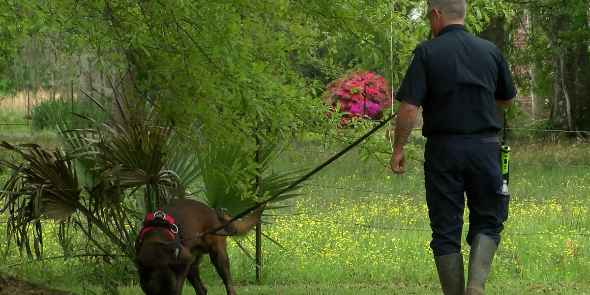Group dedicated to reuniting missing kids with loved ones for free seeks new search dogs, volunteer handlers