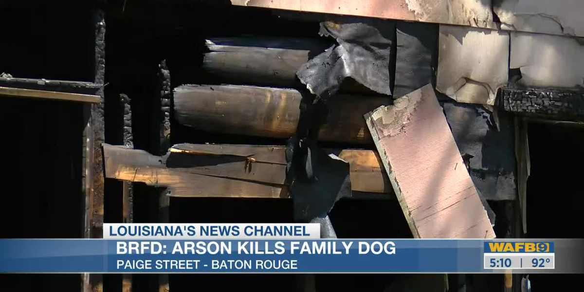 BRFD investigators asking for information about arson that killed a family's dog