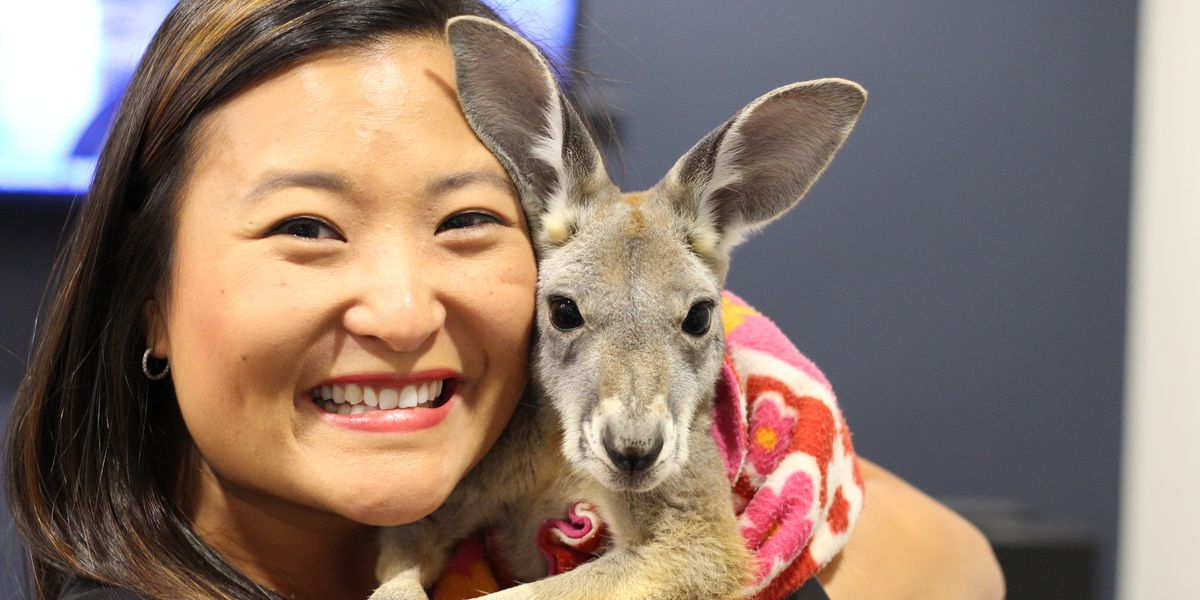Kangaroo, Sloth stop by WAFB to promote 'Brews For Roos' event