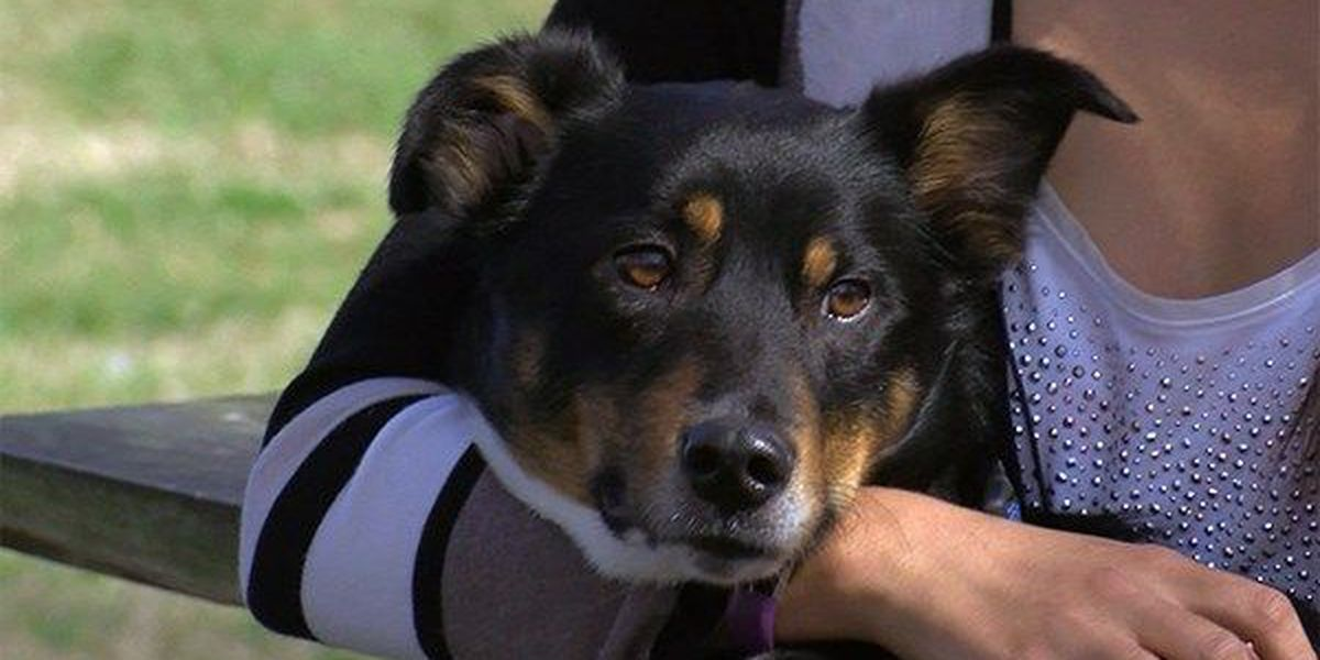Three-legged dog makes amazing recovery thanks to LSU Vet School