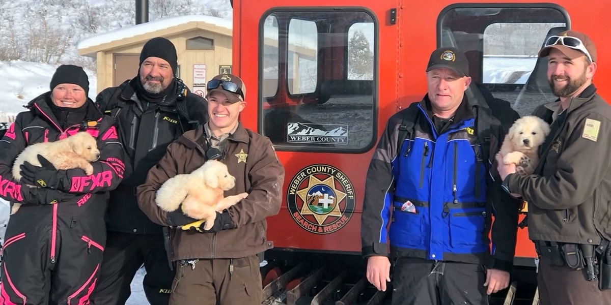 WATCH: Snowmobilers rescue puppies on mountain in Utah