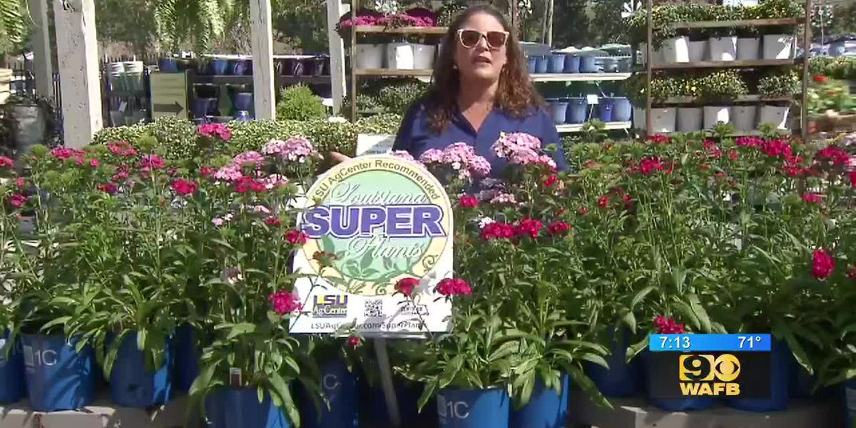 GET IT GROWING: LSU AgCenter releases its 2019 super plant