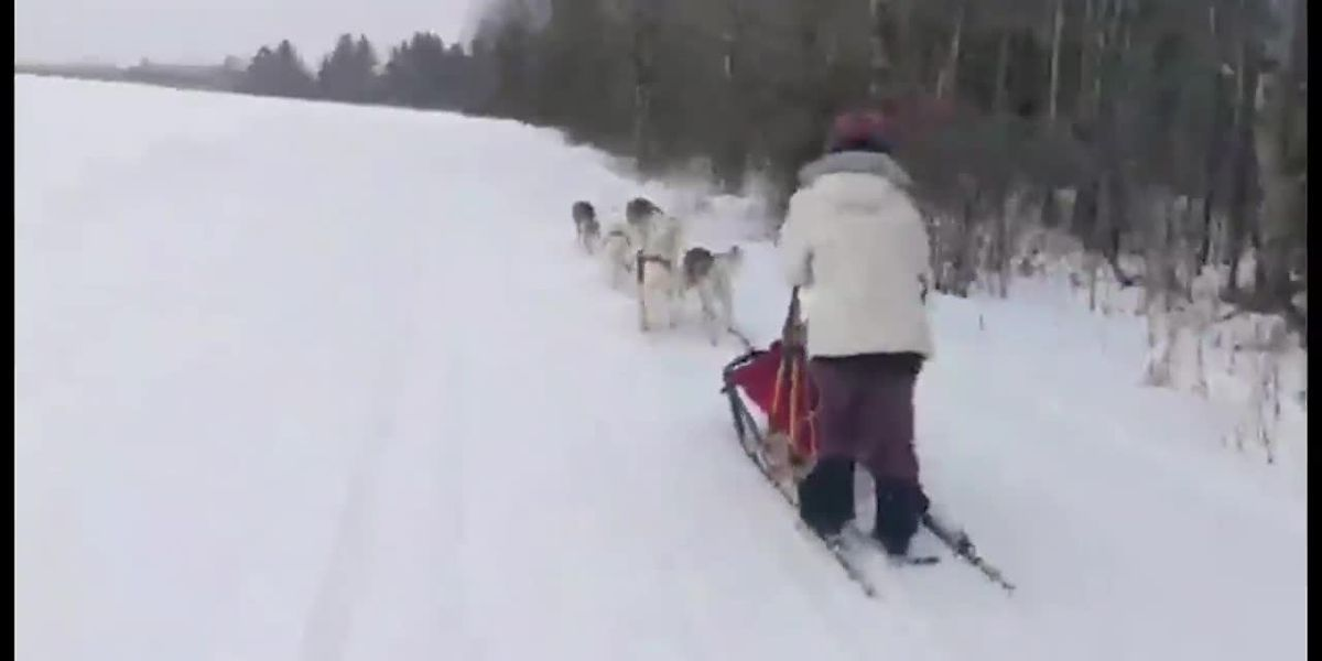 Sled dog driver delivers groceries, medical supplies in Maine