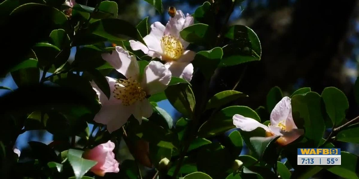 GET IT GROWING: Leslie Ann camelia