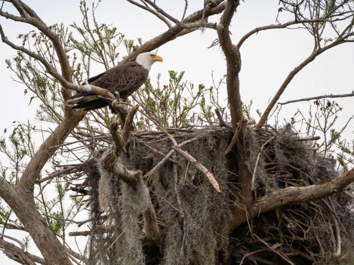 Heart of Louisiana: Bayou Eagles