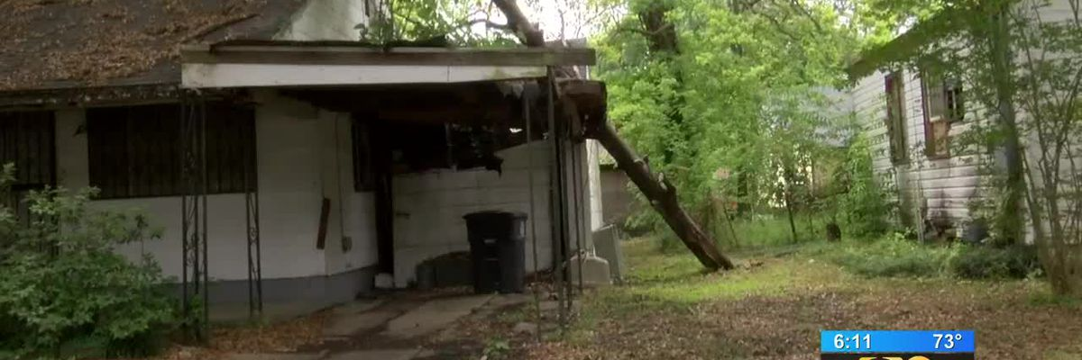 Resident says city removes tree from property next door following 9News report