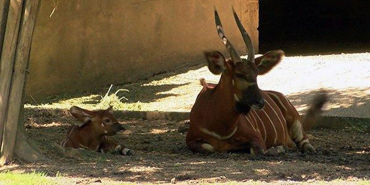 BREC's Baton Rouge Zoo announces new births