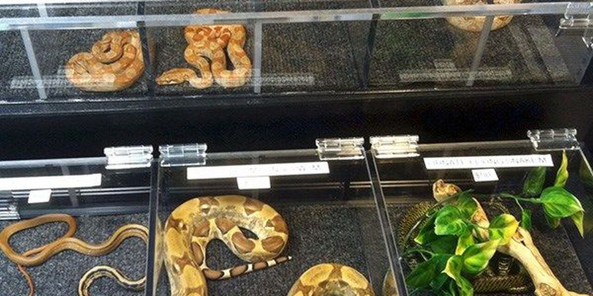 Snakes alive at Repticon this weekend!