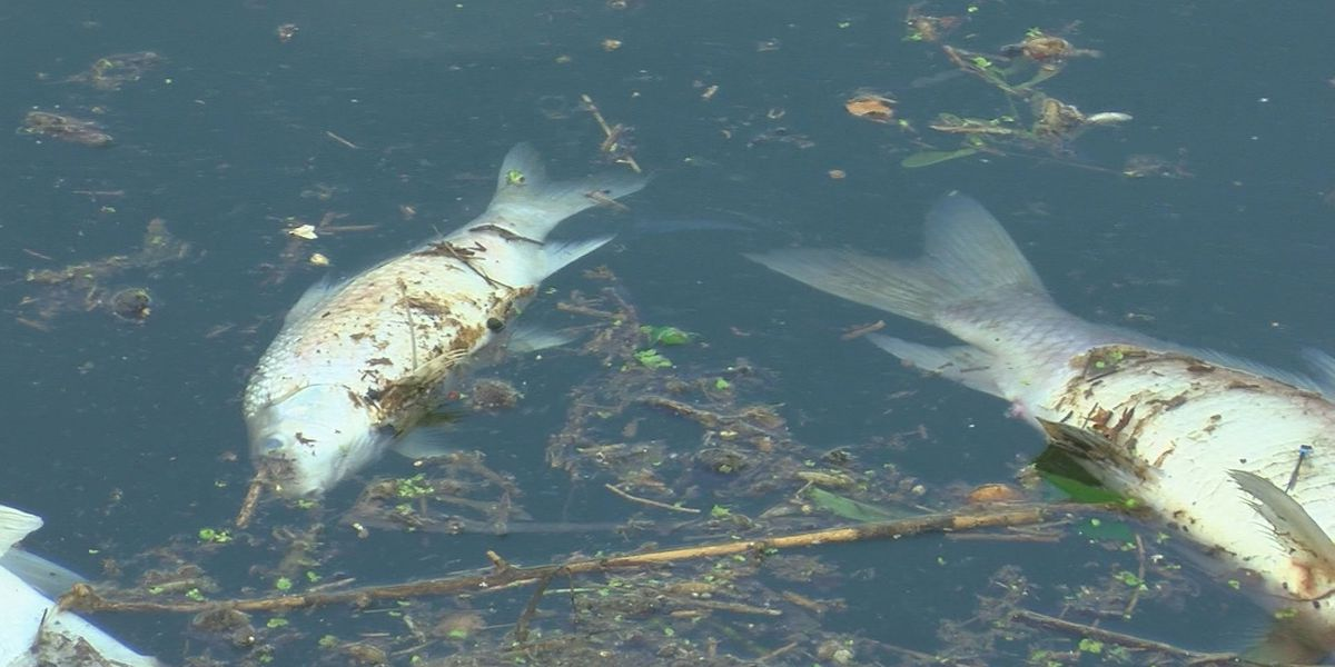 La. Dept of Wildlife and Fisheries warns of potential fish kills due to freezing temps