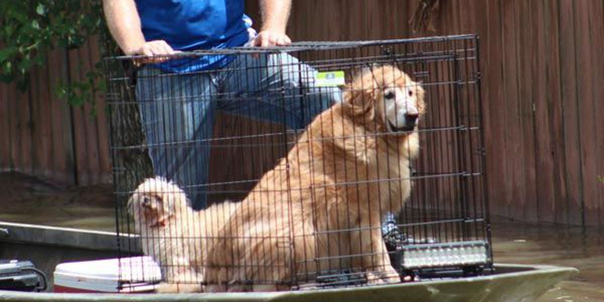 Free wellness event for dogs, cats impacted by flooding